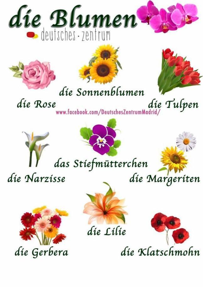 Zum Valentinstag Kauf Blumen Wir Lernen Deutsch
